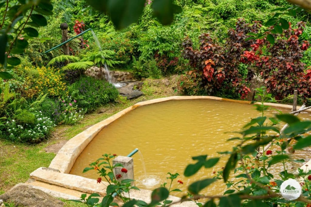 Ti Kwen Glo Cho Hot Springs 温泉 多米尼克介绍 自然景观 Dominica, the Nature Island in Caribbean 加勒比的天然之岛